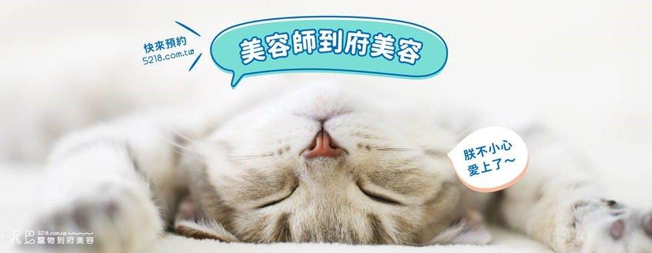 貓咪洗澡美容推薦平台●5218尾巴寵物到府美容.懶貓奴必知!免去寵物店在家千元就能洗(台北/新北/桃園/新竹/基隆)